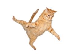 Le chat parachutiste