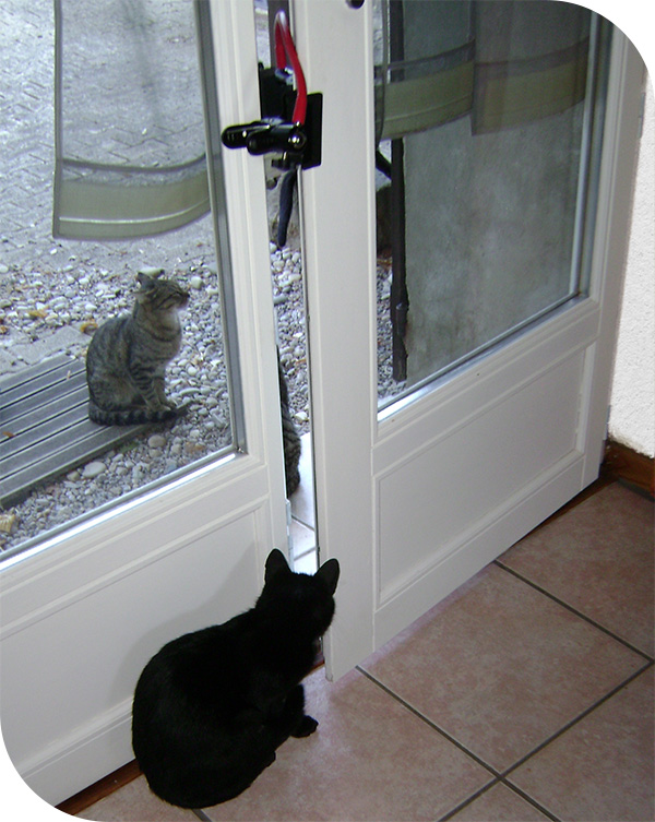 window blocker for cats protection Courandair